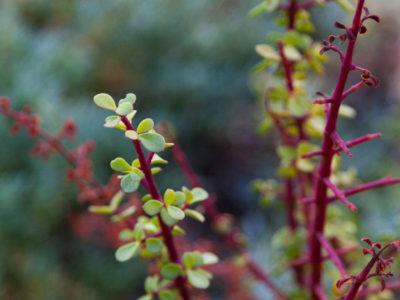 Dezeekoe Plant Life